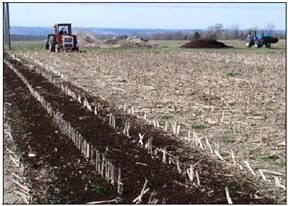 Po 25 describe the role of the following in providing for Describe soil