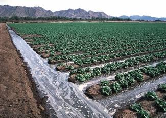 Irrigation | Advantages and Disadvantages of Irrigation
